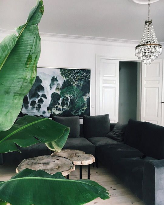 a black velvet sofa will be a timeless solution in any space