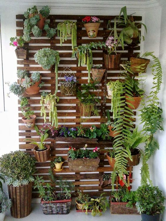 a wooden constructions holding various planters allows to create your own orangery