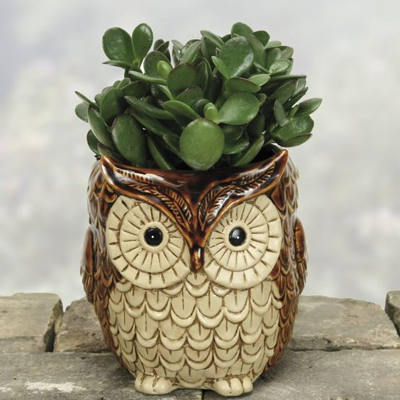 a ceramic planter shaped as an owl with succulents