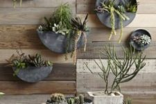 12 round zinc planters attached to the wall is a cool space-saving idea