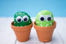 DIY pet cactus rocks