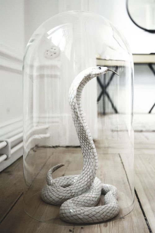 a glass cloche, rubber snake, wire and spray paint is all you need to recreate such a decoration