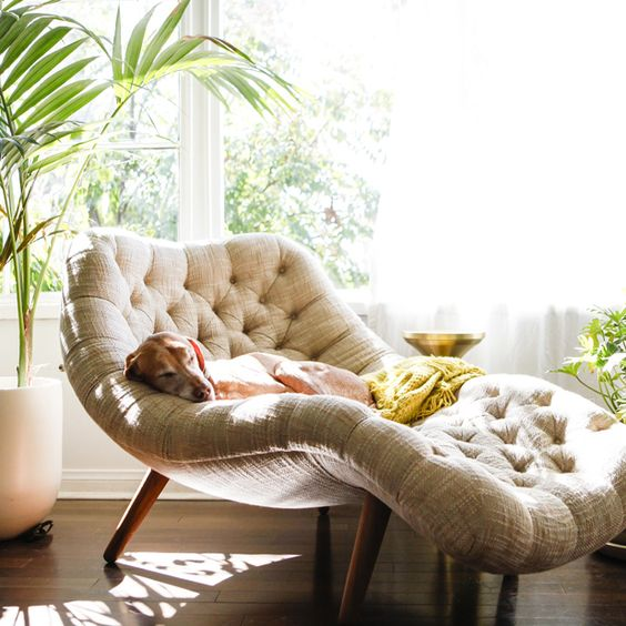 a gorgeous comfy lounger placed next to the window for comfy reading