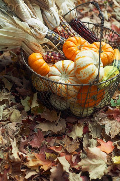 a metal basket with pumpkins, gourds and corn is a simple display that screams harvest