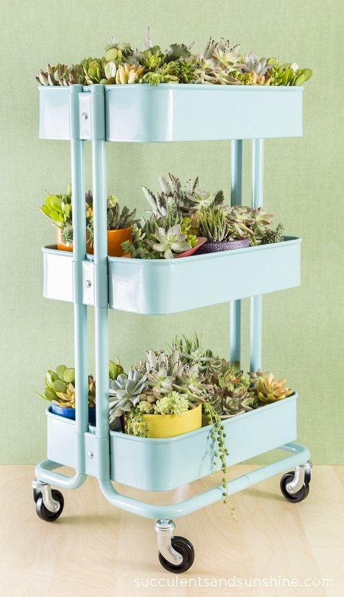 DIY succulent garden using an IKEA cart