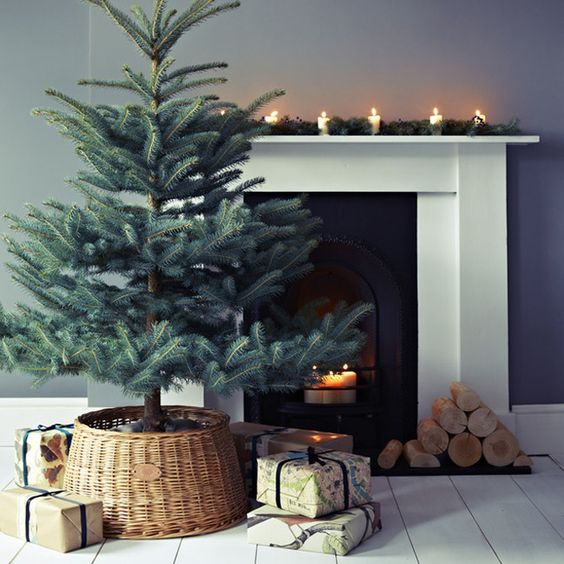 a large pine tree in a basket without any decor - enjoy the natural look of the tree