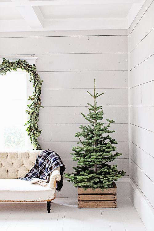 a beautiful natural tree in a crate - you won't need more for a chic rustic look