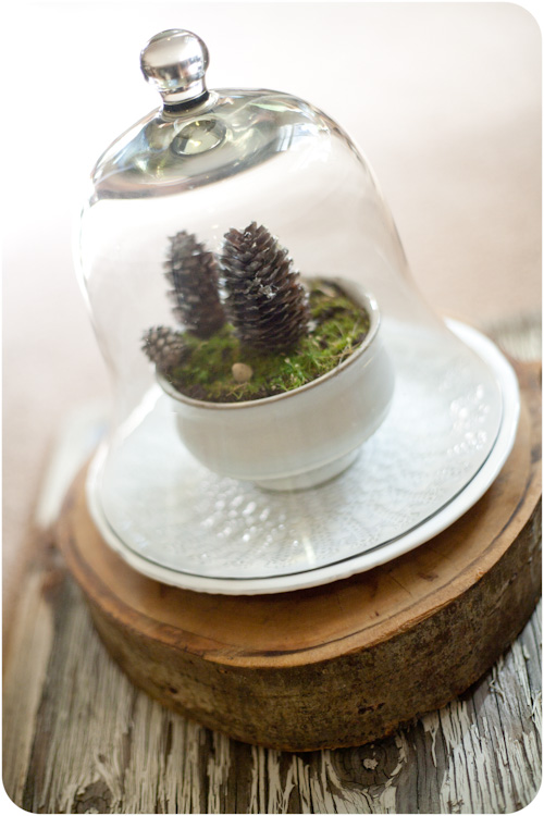 DIY winter terrarium with pinecones (via www.homedit.com)