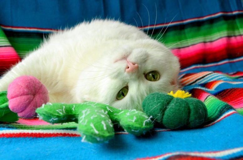 DIY cactus catnip toys (via www.tattooedmartha.com)