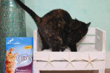 DIY coastal cat bed