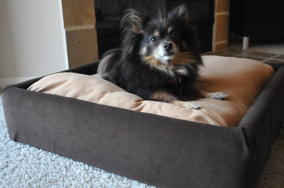 DIY upholstered platform dog bed
