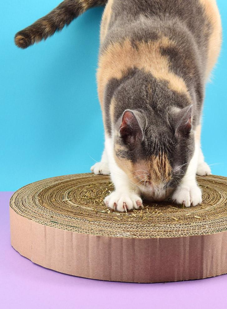 DIY round cardboard cat scratcher (via www.dreamalittlebigger.com)