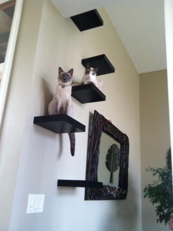 black IKEA Lack shelves attached to the wall wil excite your cats, it's a simple tree idea
