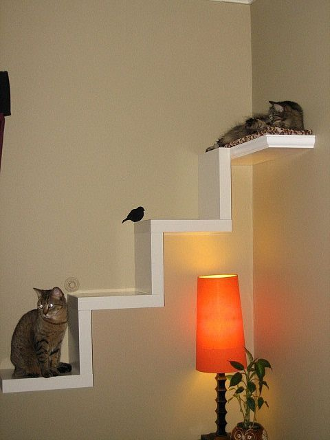 a cat tree shaped as a real ladder is safer for cats and is suitable for smaller kitties, too