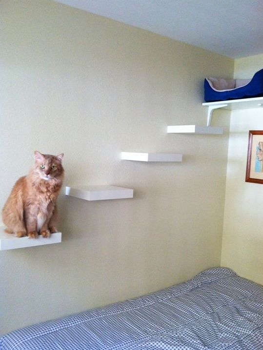 a stylish cat tree made of floating IKEA Lack shelves with a large sleeping space on top