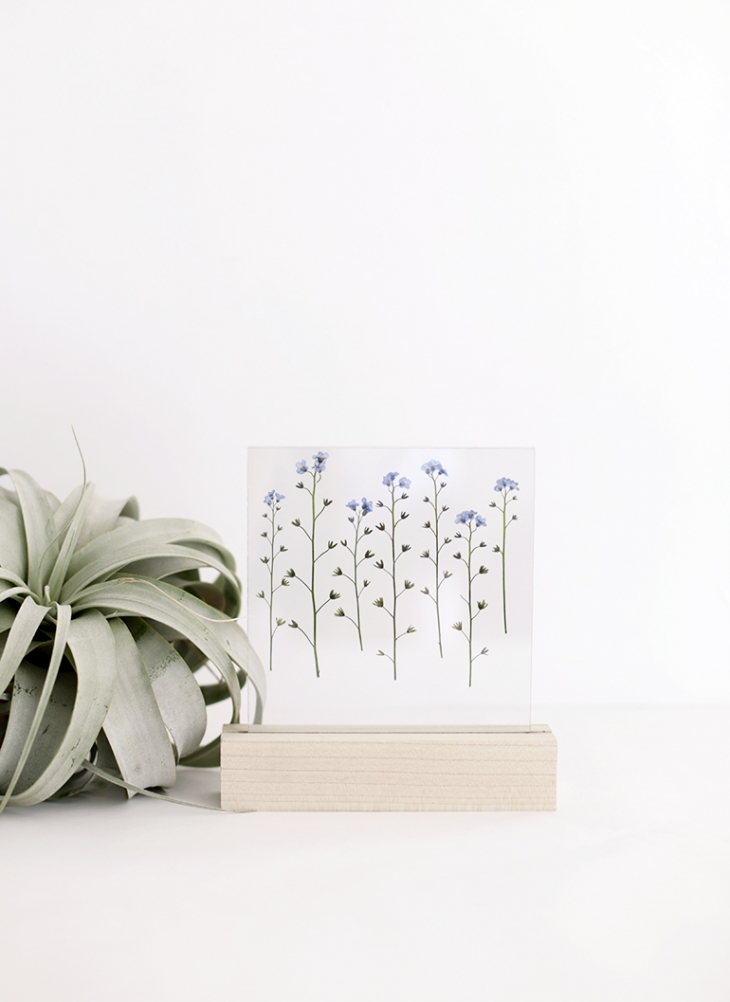 DIY modern pressed flower displays using clear acryl (via themerrythought.com)