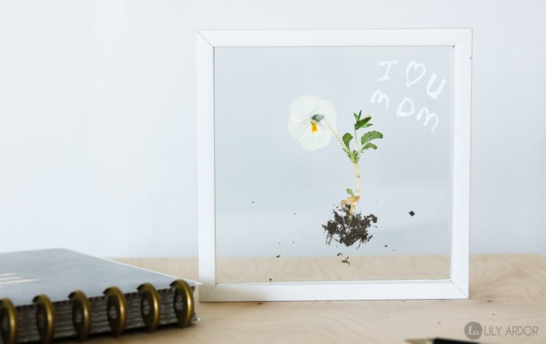 DIY modern flower with roots art in a clear frame (via www.lilyardor.com)