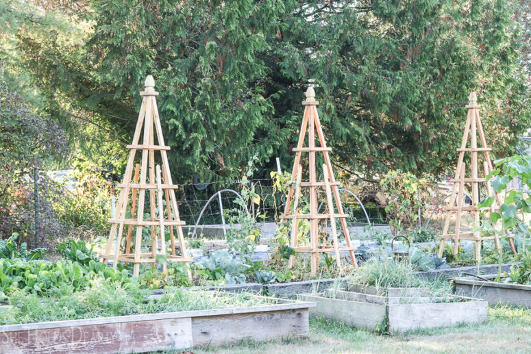DIY French garden trellises (via sheholdsdearly.com)