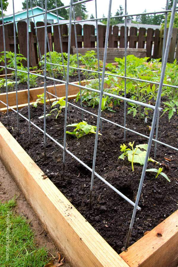 DIY cattle panel garden trellis (via frugalfamilyhome.com)