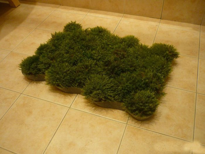 DIY real grass bathroom mat (via en.fishki.net)