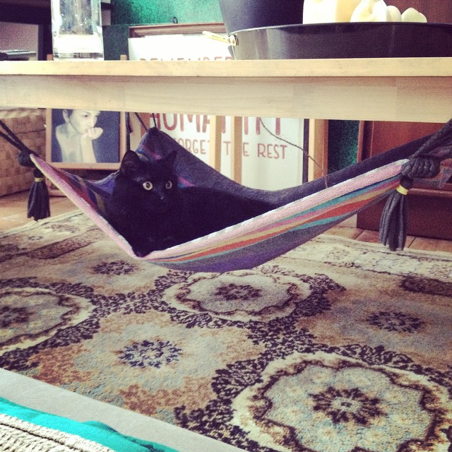 Ideas de hamacas para gatos hecho en casa - Hamaca de bricolaje de una alfombra para colgar en muebles.