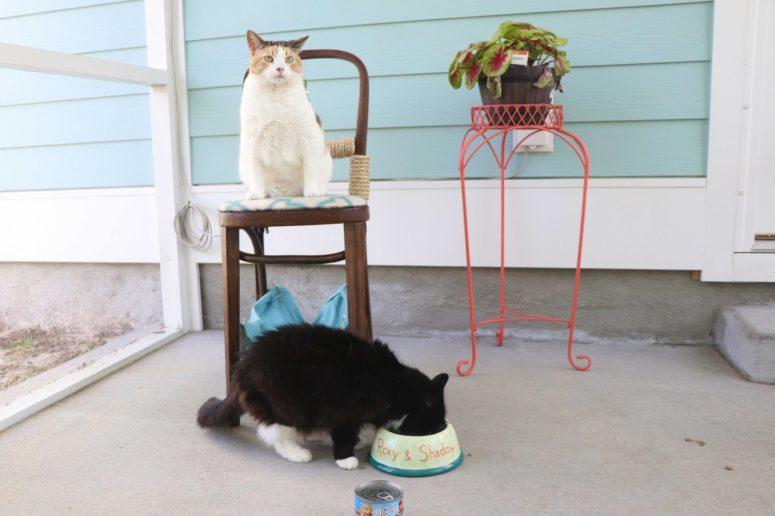 Ideas de hamacas para gatos hecho en casa - Silla de hamaca para gatos DIY