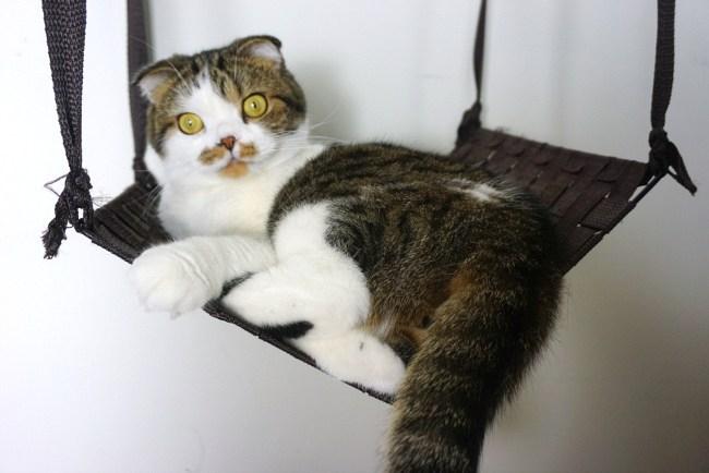 Ideas de hamacas para gatos hecho en casa - colgante de bricolaje (a través de itsautumnslife.com)