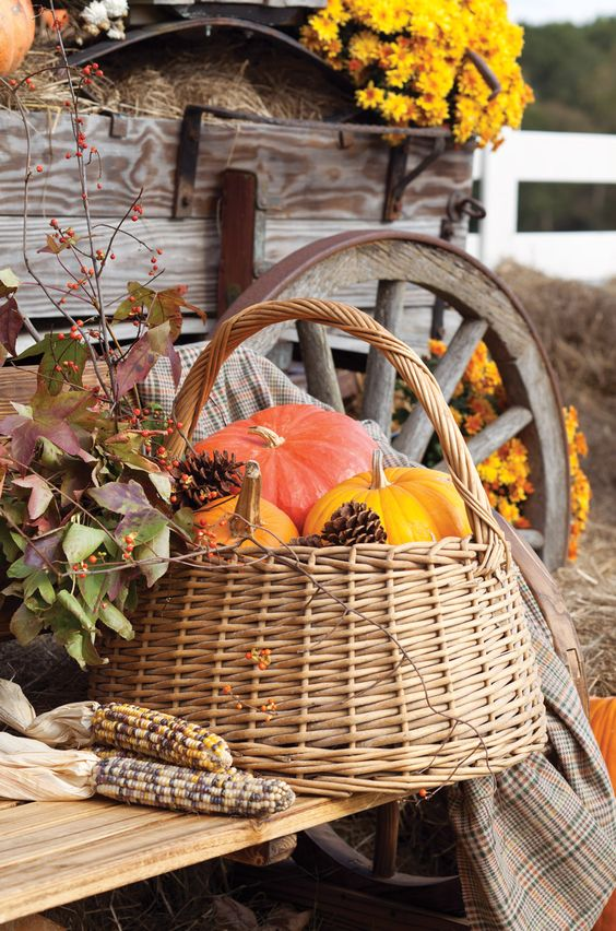 a basket with colorful pumpkins and pinecones is a perfect idea for indoor and outdoor decor
