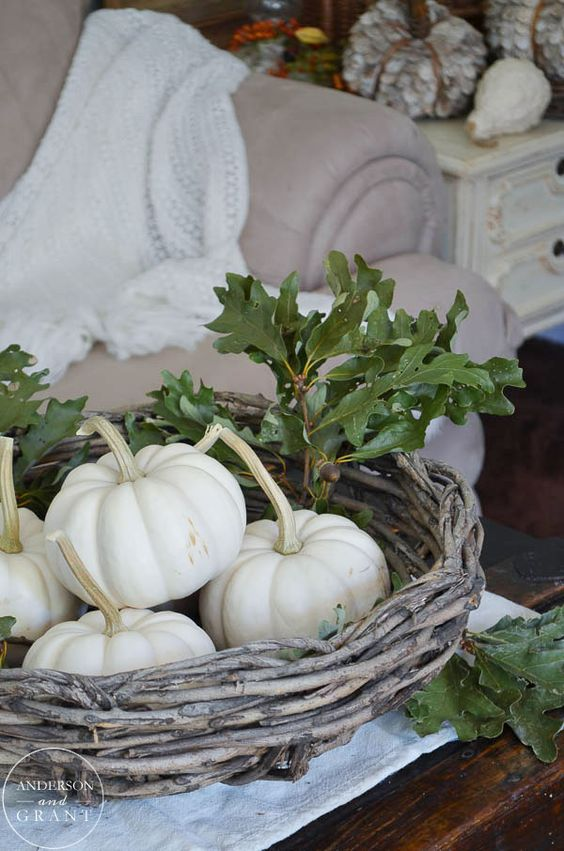 a basket with white pumpkins and real green oak leaves looks very natural and rustic