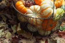 11 a wire basket filled with gourds and corn plus corn husks for outdoor or indoor decor