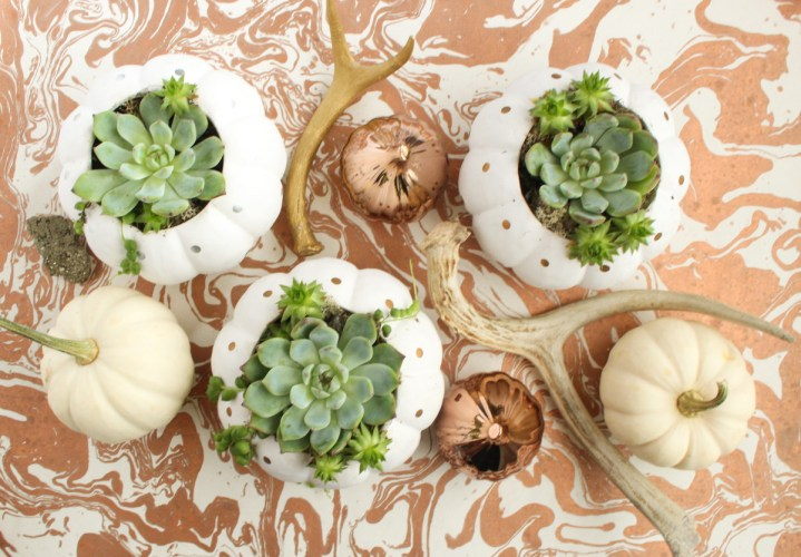 DIY faux pumpkin planters with polka dots and succulents (via www.goldstandardworkshop.com)