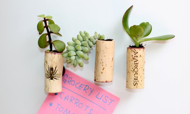 DIY wine cork succulent planters with magnets (via www.mnn.com)