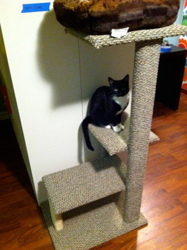 DIY three-level cat tree with carpet covered parts (via www.diynetwork.com)