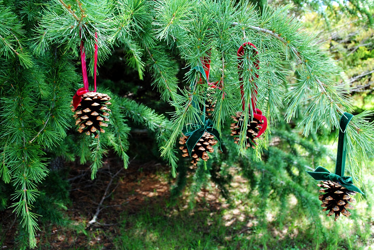 DIY hanging festive pinecone ornament with luxurious velvet ribbon bows