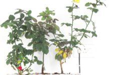 DIY wicker basket planter