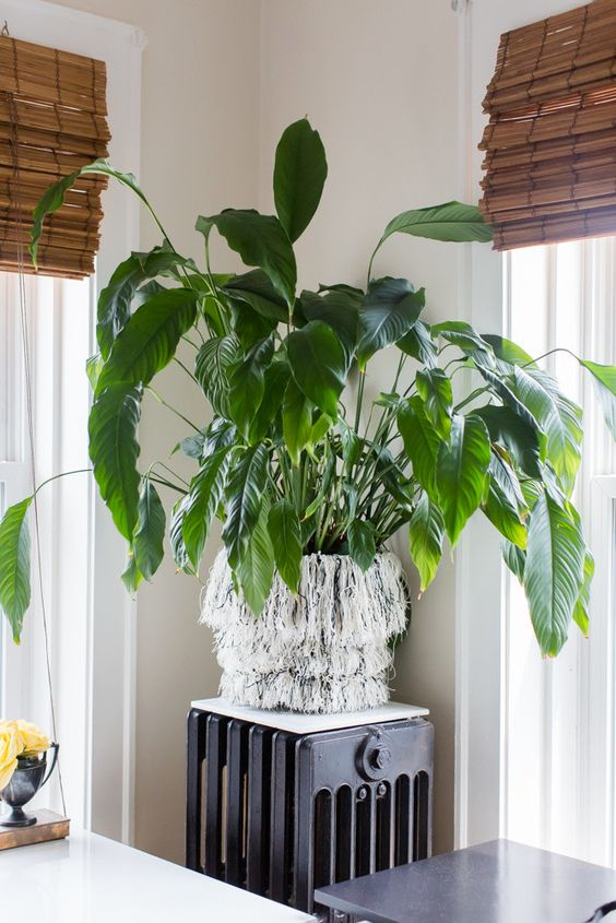 a fringed planter is a very boho chic idea and is a very easy DIY project to make in some minutes