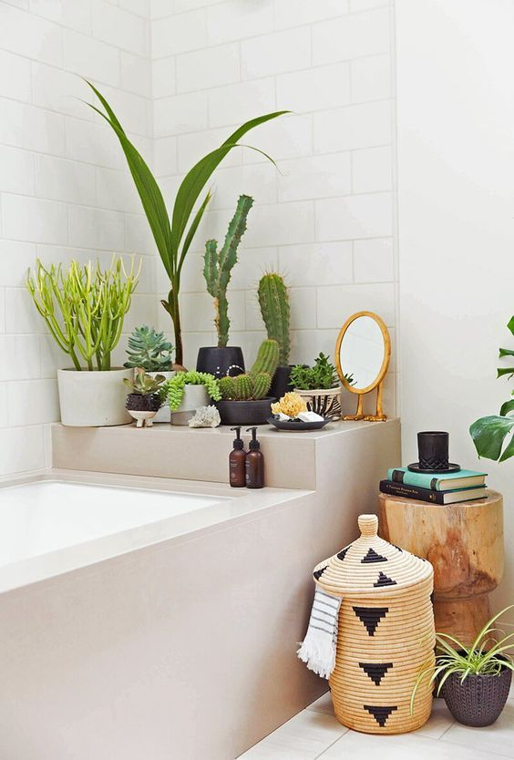 a bathtub shelf is sued to store some potted cacti and succulents on it to refresh the space