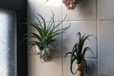 25 tillandsias in seashells attached in the shower are a cool idea as they need no soil, only water to live