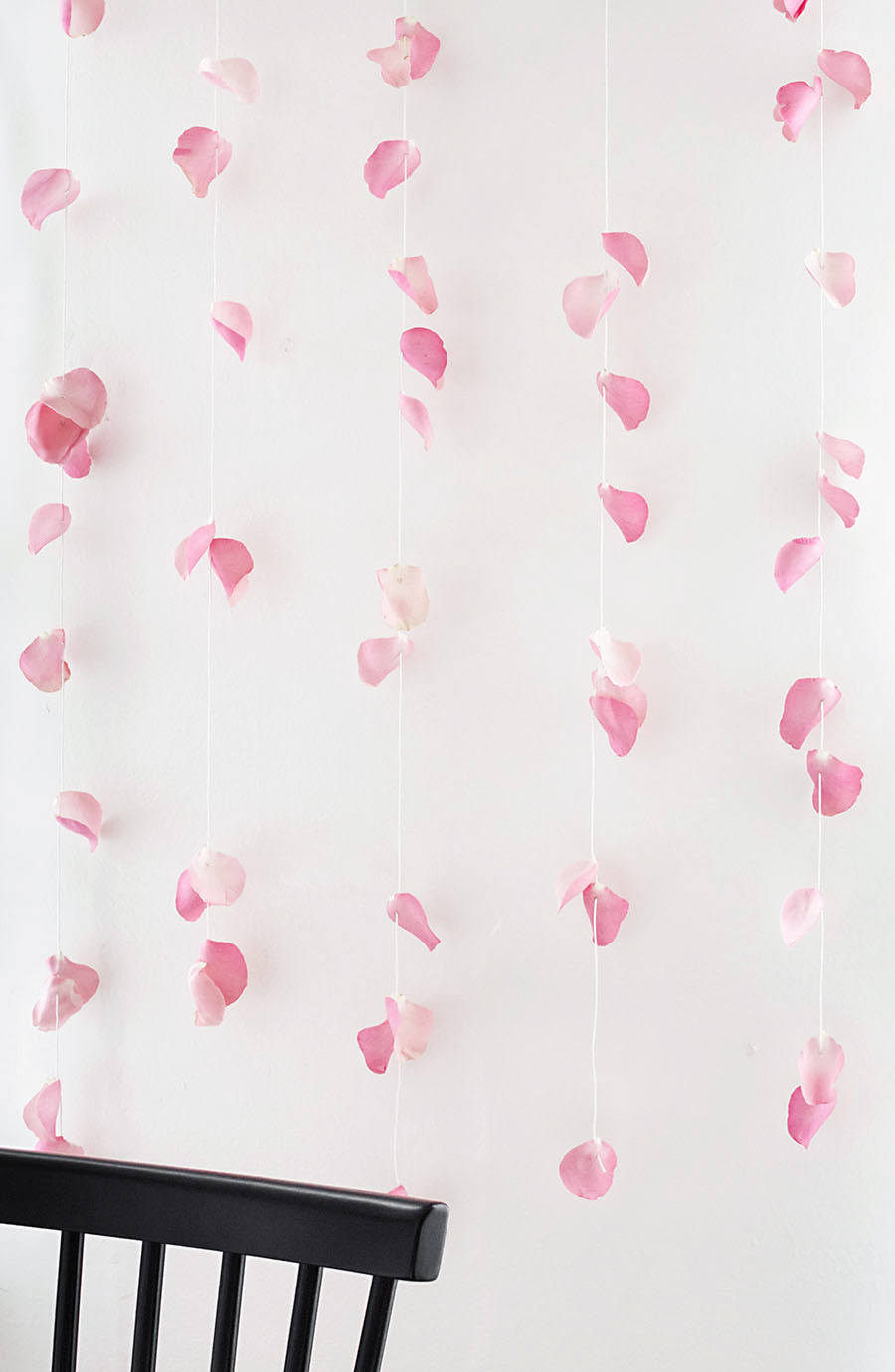 DIY fresh rose petal backdrop for taking pics
