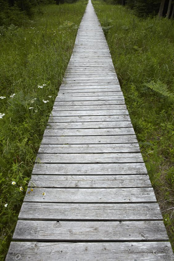a rustic wooden pathway with greenery and wildflowers around is just amazing and inviting