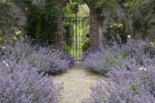 light-colored gravel looks fantastic with lush lavender like here – this contrast will be noticed