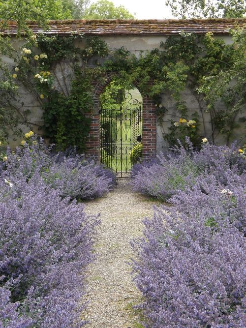 light-colored gravel looks fantastic with lush lavender like here - this contrast will be noticed