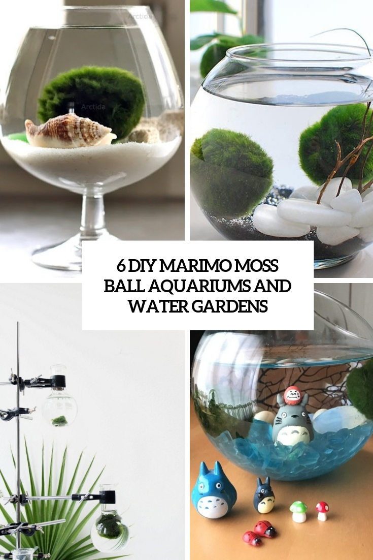 6 DIY Marimo Moss Ball Aquariums And Water Gardens