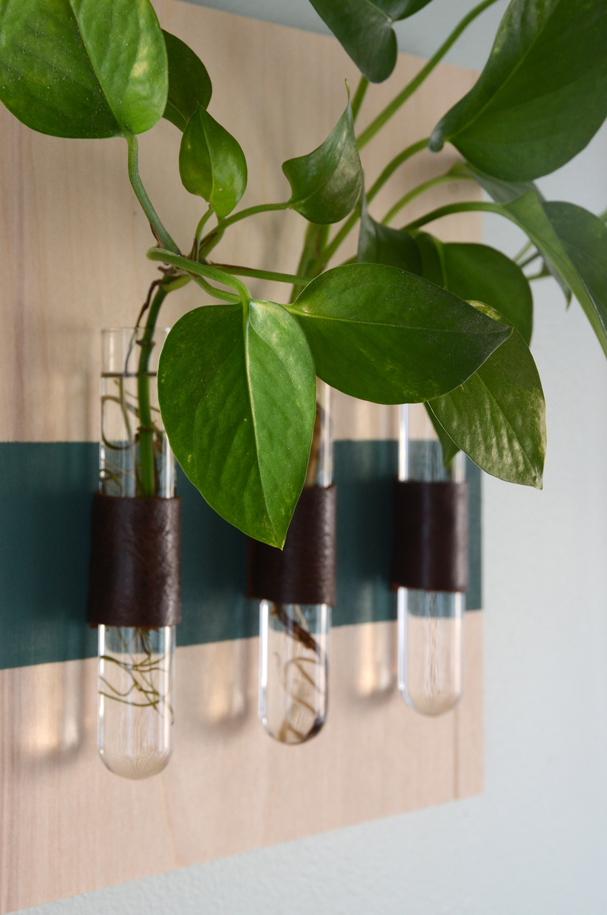 DIY wall mounted test tube vases using leather