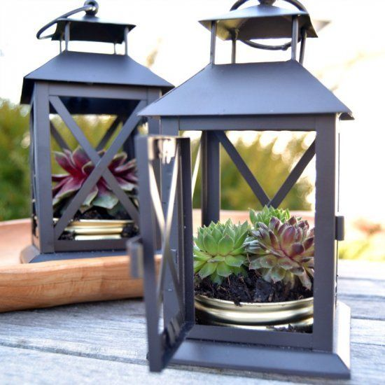 lanterns with green and burgundy succulents in tin cans are a simple and cute outdoor decoration for summer