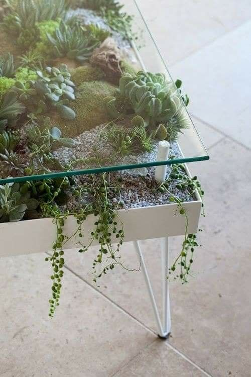 a white hairpin coffee table with a planter with succulents and greenery and a glass top