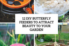 12 diy butterfly feeders to attract beauty to your garden cover