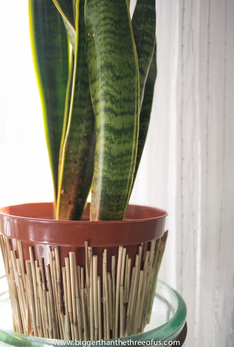 DIY planter spruced up with bamboo skewers