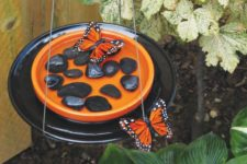 DIY butterfly feeder with pebbles
