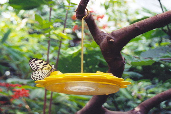 DIY colorful butterfly feeder in several versions